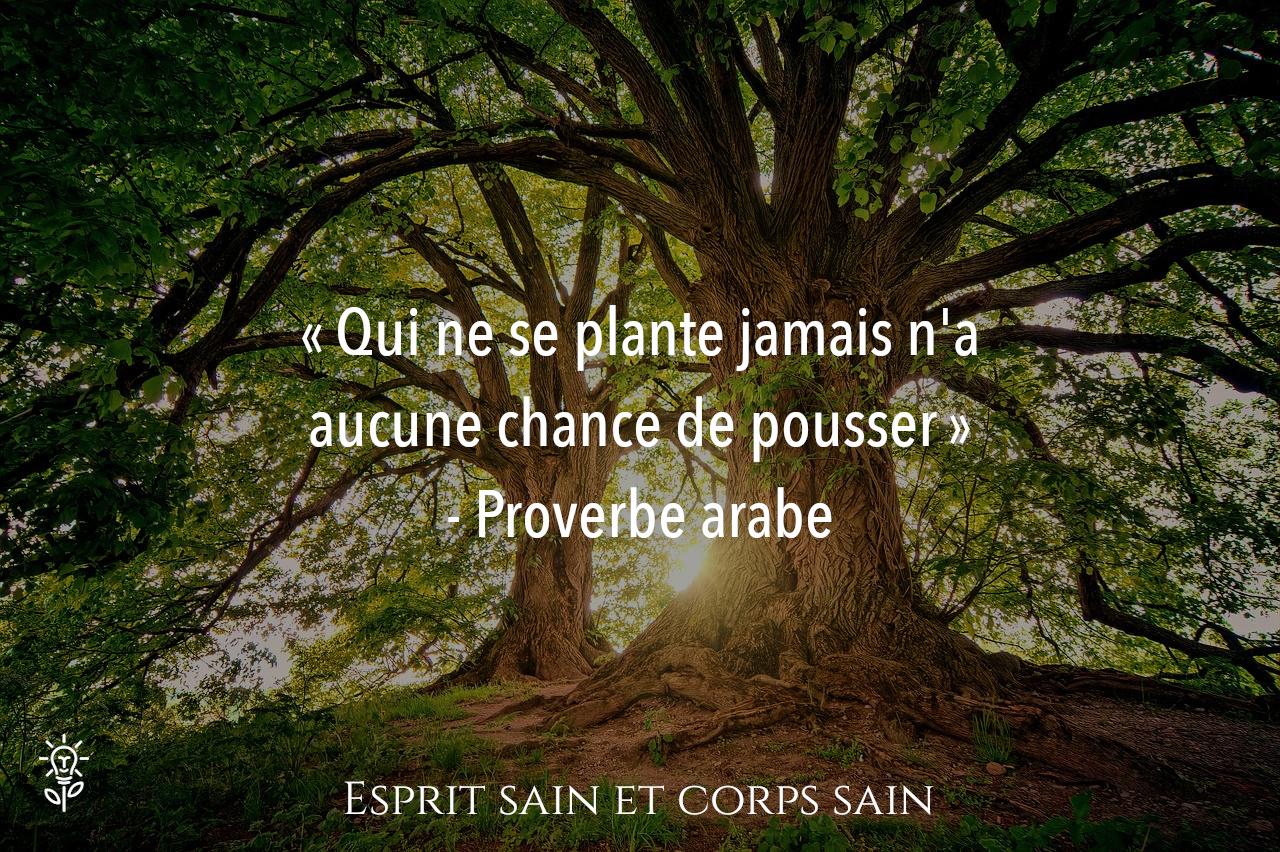 citation développement personnel proverbe arabe